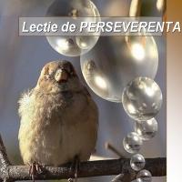 Lectie de perseverenta