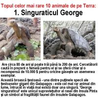 Cele mai rare specii din lume
