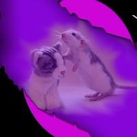Hamsterii
