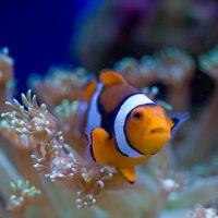 Culori  in regifele de corali