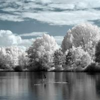 INFRARED PHOTO GALLERY