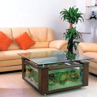 A C V A R I U L - vas de sticlă sau bazin în care se cresc animale sau se cultivă plante acvatice