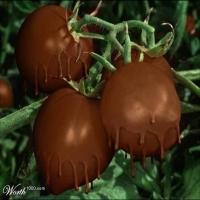 Facut din ciocolata