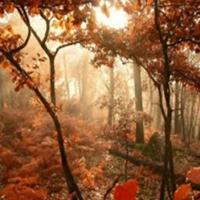 Peisaje autumnale