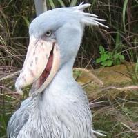cele mai neobisnuite animale din lume