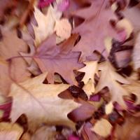 Arta din frunzele toamnei