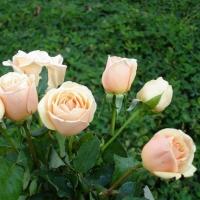 Parfumul florilor