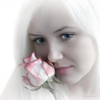 Boboci de trandafiri
