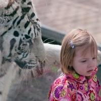 Animale haioase