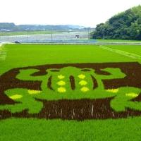 Arta pe plantatii de orez