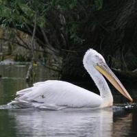 Delta Dunarii intre superlative si curiozitati