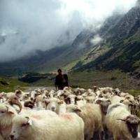 Reprezentantul guvernului si ciobanul