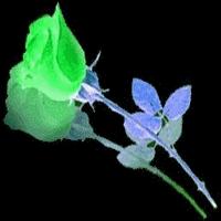 Trandafiri si...TRANDAFIRI