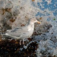 Premiile britanice din 2010 pentru fotografii din lumea salbatica
