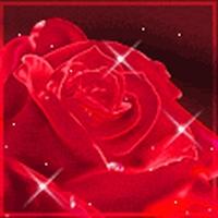 Trandafiri II