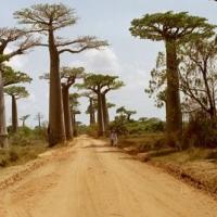 Arbori deosebiti