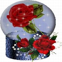Trandafiri 5