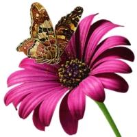 Fluturi si flori 3