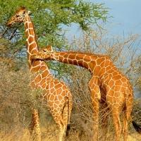 Salutari din Africa!
