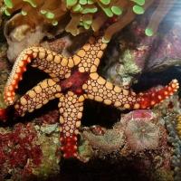 Corali din Hawai