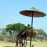 Safari Park _ rezumat_Israel 2009