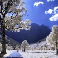Iarna si numai iarna