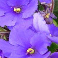 Natura in nuante de violet