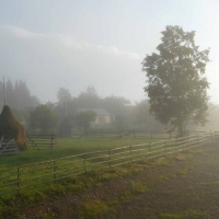 Frumusetea diminetilor