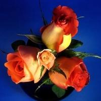 Una spina et una rosa