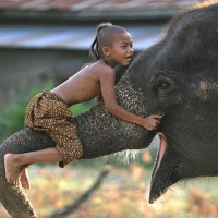 oameni si animale