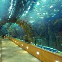 Oceanograful din Valencia