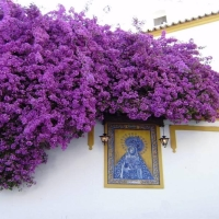 Cordoba flower facades