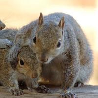 Wonderful squirrels