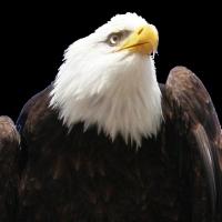 USA - voiaj placut