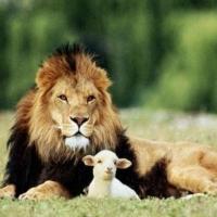 Prietenia dintre animale
