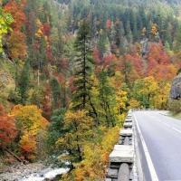automne dans la monde