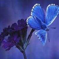 Fluturele si floarea