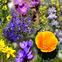 Lente Spring Gabril@