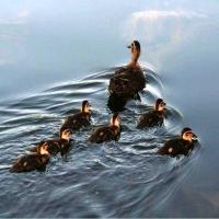 Maternitate Aviară. 01