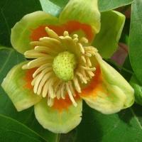 Flori de pomi si arbusti