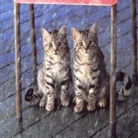 Pisicute...pisicute