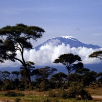 Jungla africana