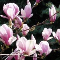 Anotimpul florilor