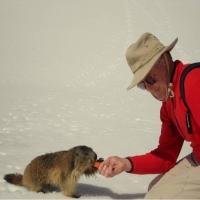 Adorables marmottes