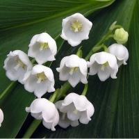 Dedicatie pentru cei cu nume de flori