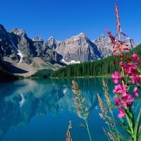 Relfexii in natura