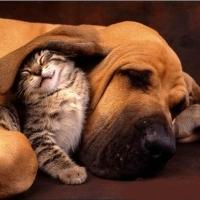 Precum Câinele Şi Pisica. 01