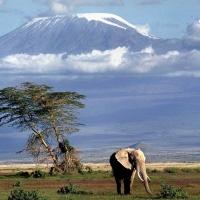 Kilimanjaro - Africa