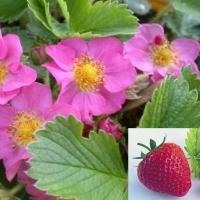 Florile fructelor