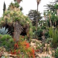 Beaute des jardins